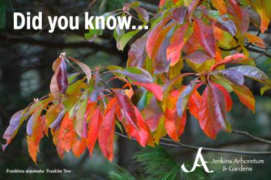 Jenkins Arboretum & Gardens Endowment Campaign Postcard